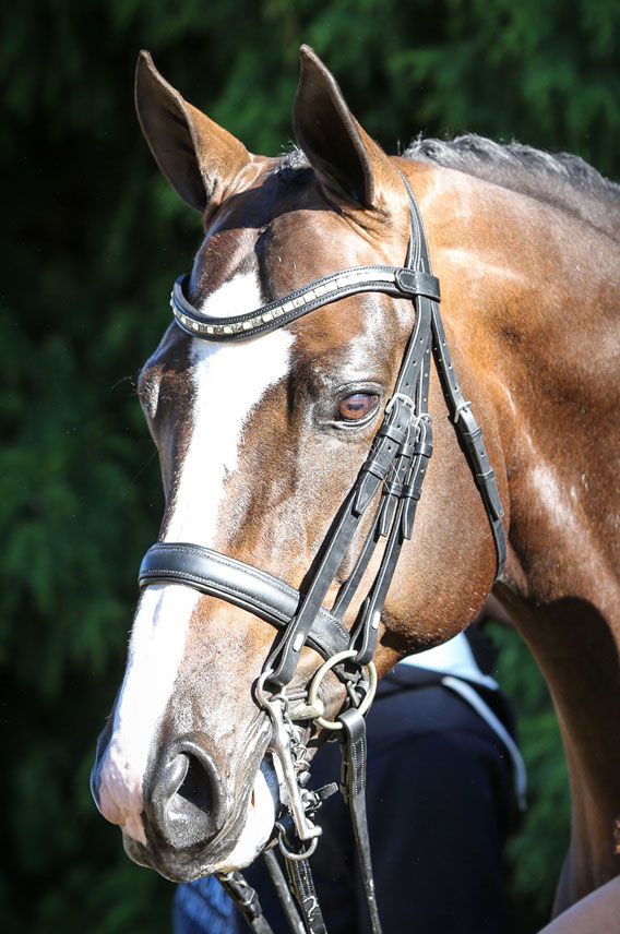 Bellario (imp) owned by Narbethong EP